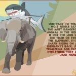 #SharkWeek Twitter Photo