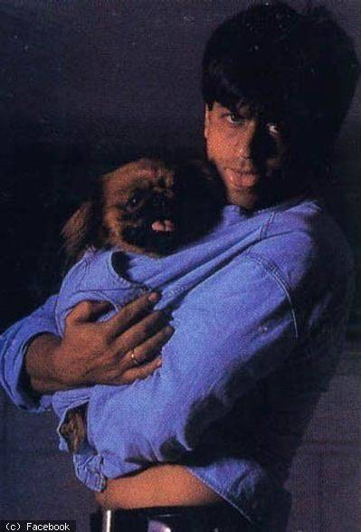 """Shah Rukh Khan Universe Fan Club on Twitter: """"#DidYouKnow Shah Rukh Khan's  favourite book is """"The Hitch-Hiker's Guide To The Galaxy"""" by Douglas Adams.  He has a dog named Chewbacca. The actor"""