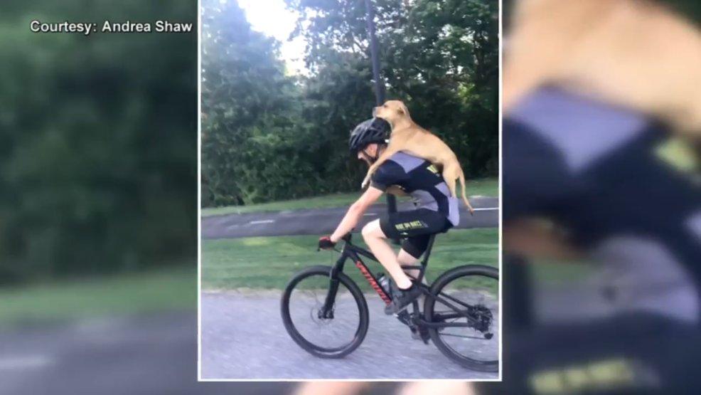 Dog's journey up the East Coast goes viral: https://t.co/8EG98GgJiv