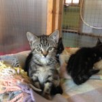 Thame Cattery Image