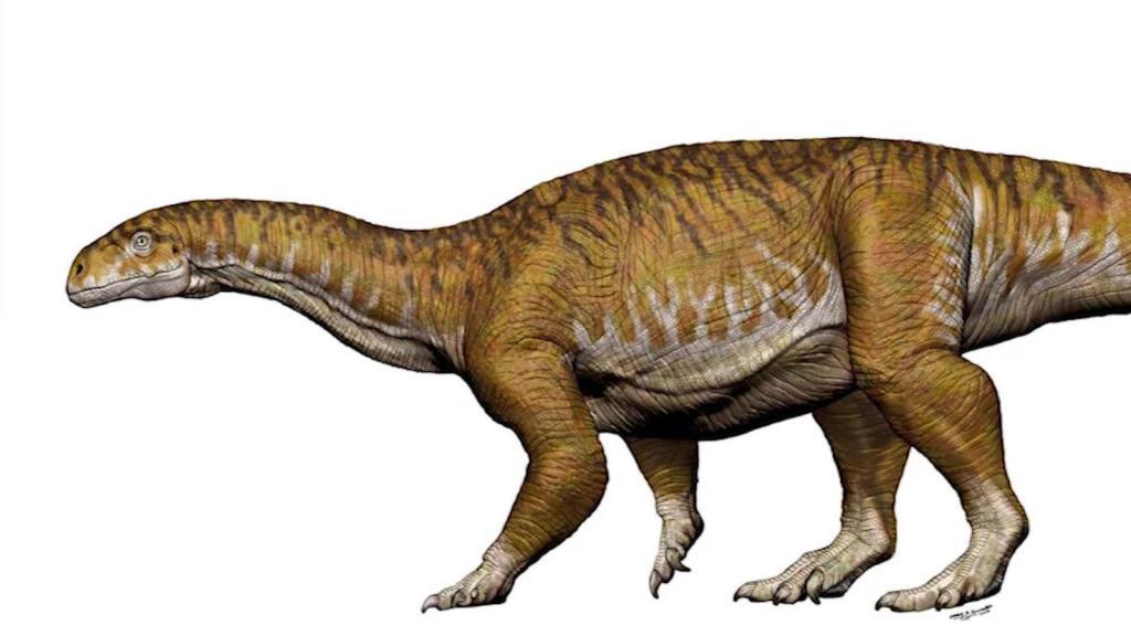 Creían que era broma: así descubrieron el primer dinosaurio gigante del mundo en Argentina https://t.co/YGcRB0QxVx https://t.co/KIW9VlsGPI