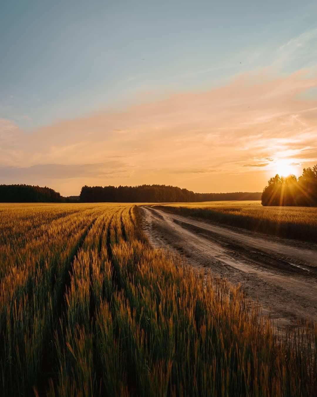фото лучшие виды русских полей