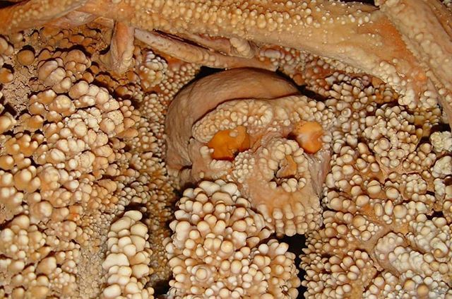 What a beautiful way to be preserved! 😍  This is the Altamura Man, the remains of a Neanderthal found in Lamalunga Cave in Italy. Embedded in calcite, he's thought to be between 128,000 and 187,000 years old. His skeleton is so complete even the delicate bones inside his nos…
