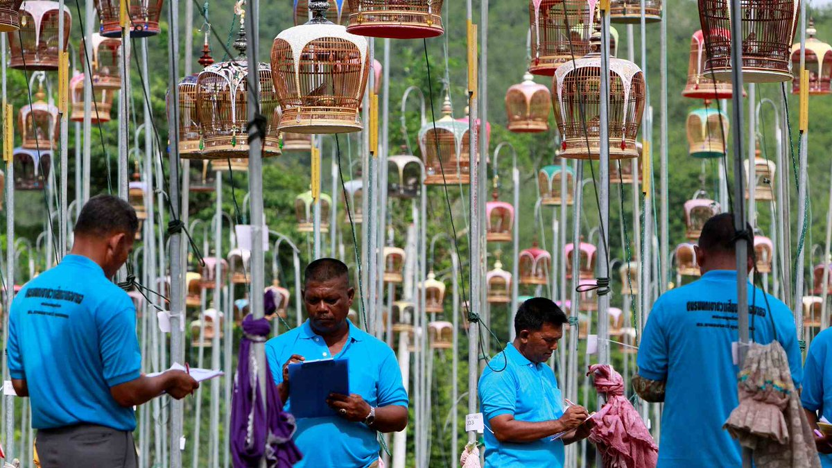 The spectacle of bird-singing contest in #Thailand