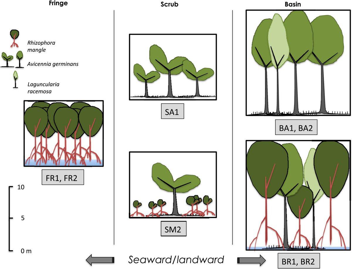 read Lentivirus Gene Engineering