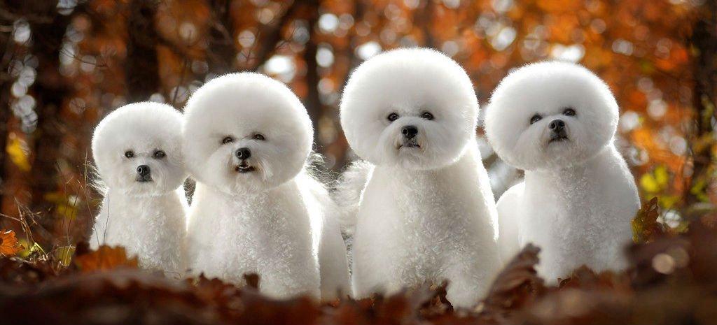 funny dog names - 1024×465