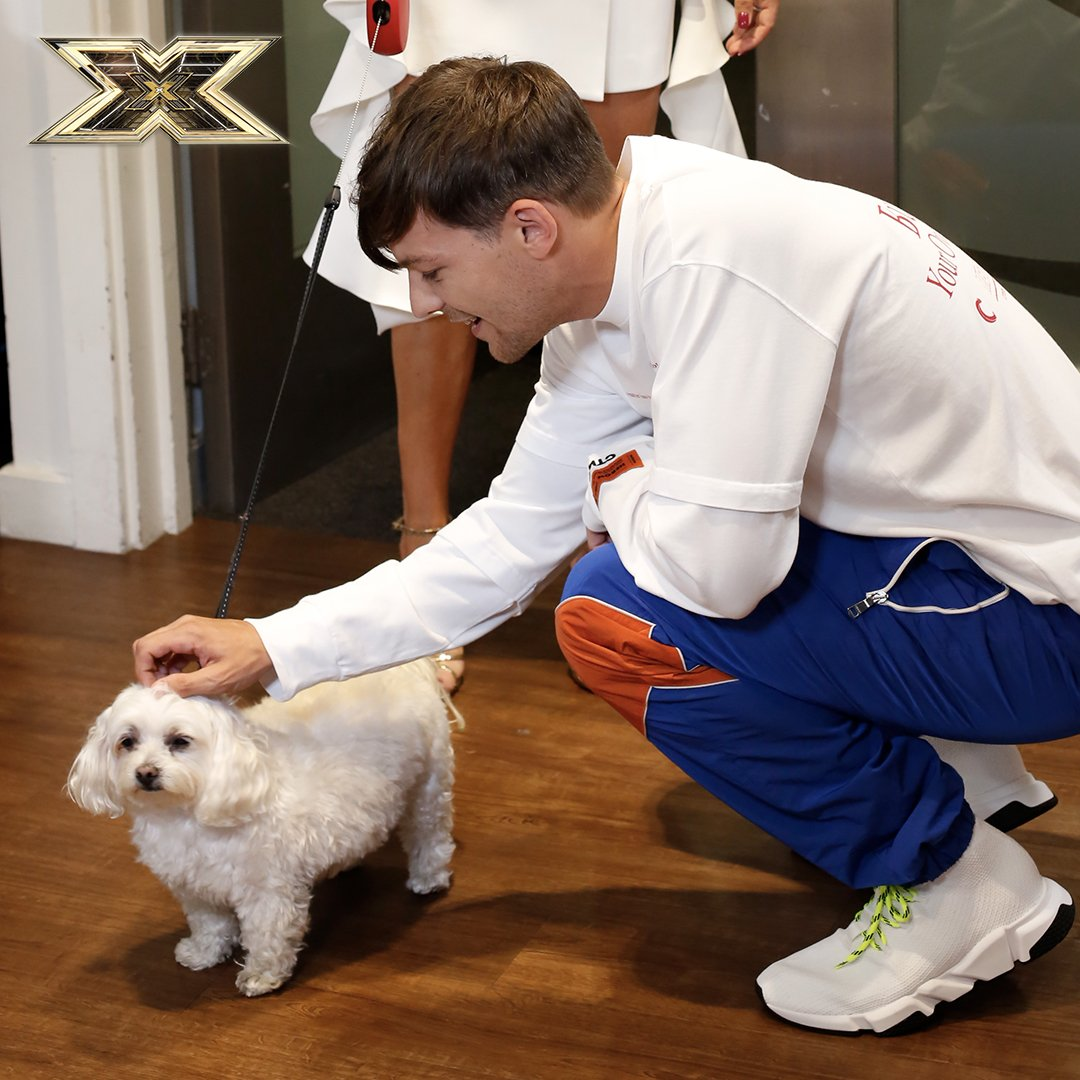 When @Louis_Tomlinson met Poupette... 🐶🐶🐶 #XFactor #8YearsOfOneDirection