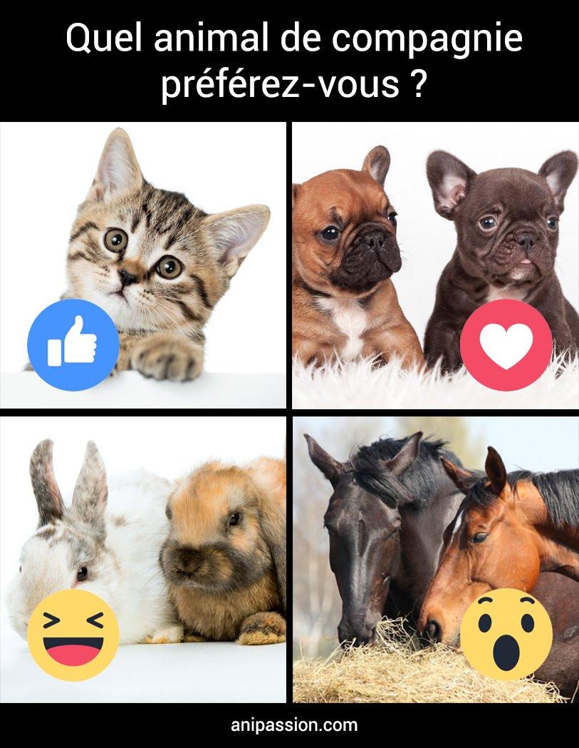 Mon Chat Dort Sur Mes Pieds mon chat quand  (@reactionsanimal) | twitter