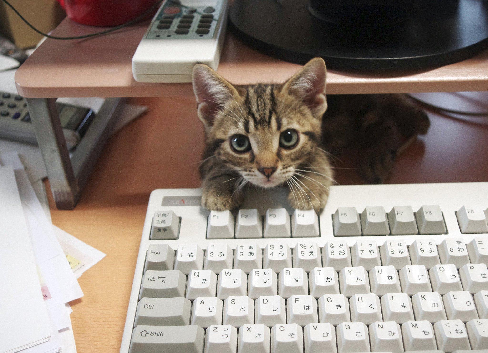 ついさっきまで、大暴れして仕事の妨害をしていたと思いきや、数分後にはコテッと寝ている。このように、子猫の毎日は分刻みのスケジュールなのである。(そして、この隙に仕事を進める)