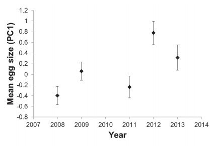 Egg size and shape variation in Rufous Bush Chats (Cercotrichas galactotes) breeding in date palm plantations: hatching success increases with egg elongation stl.publisher.ingentaconnect.com/contentone/stl… #ornithology