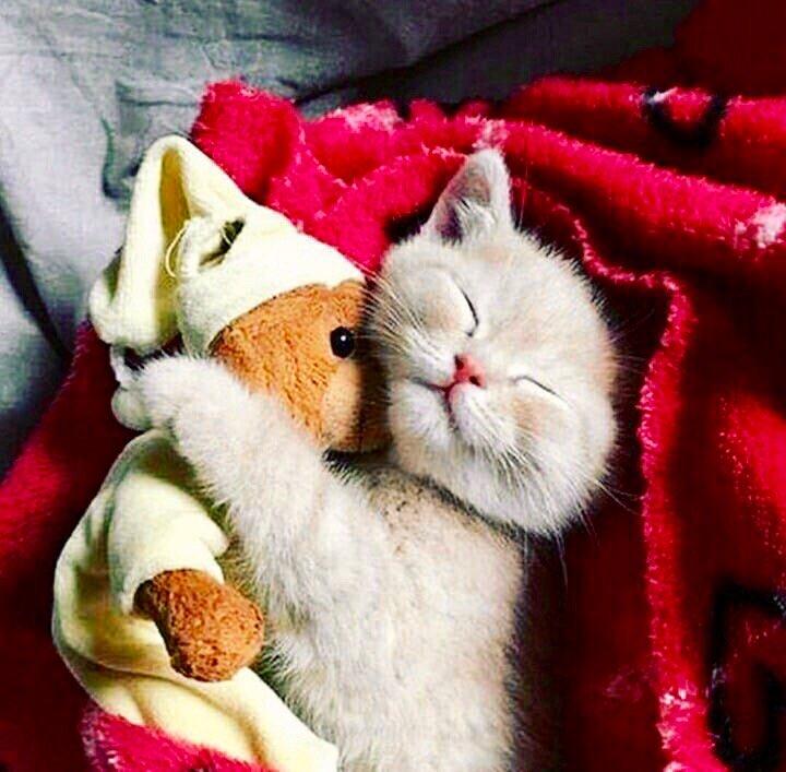 Прикольная картинка кот спокойной ночи, мне грустно без
