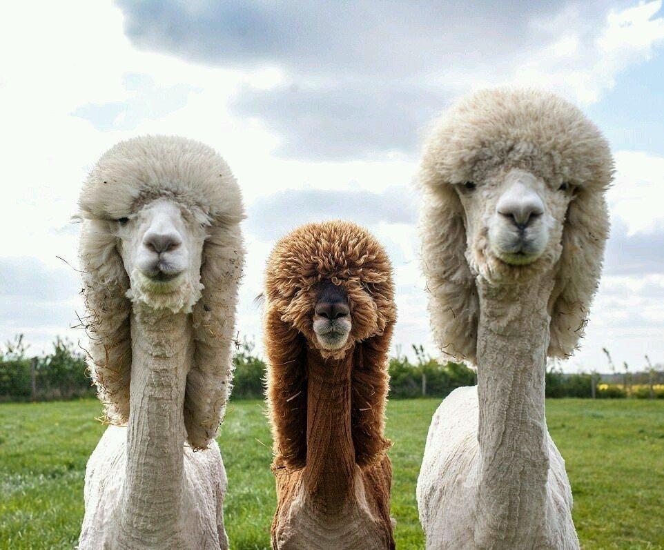 Нарисовать открытку, прикольная картинка группы животных