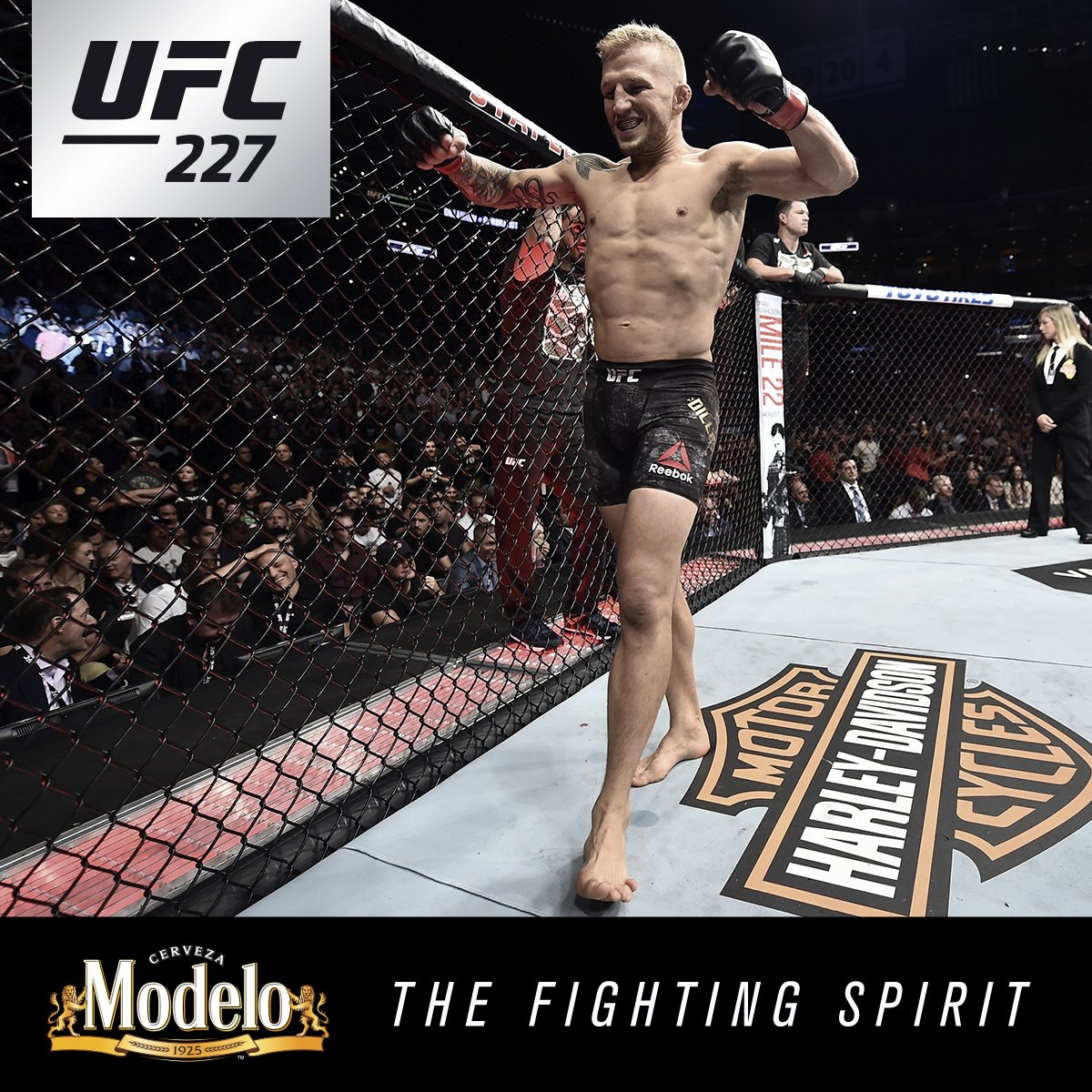 Leaving no doubt.  @TJDillashaw rose to the occassion once more showing his #FightingSpirit. @ModeloUSA #UFC227