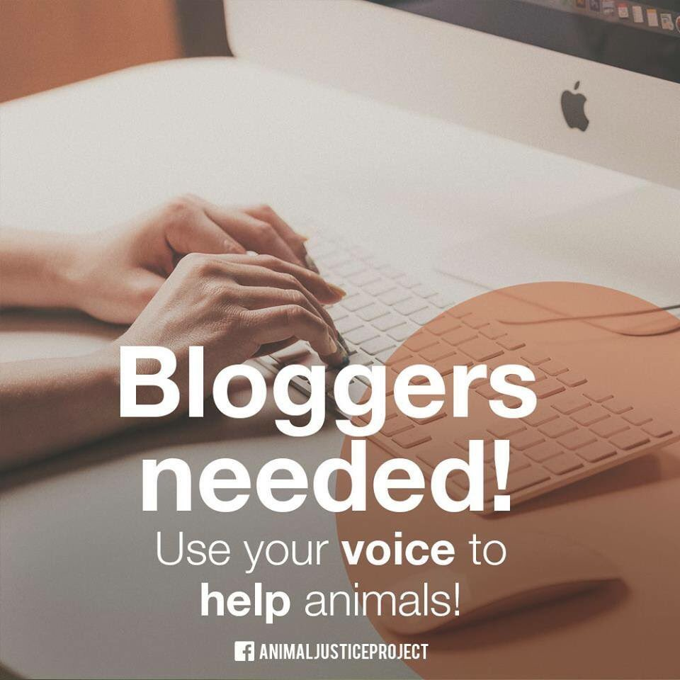 #VOLUNTEER #BLOGGERS NEEDED!  Do you want to help #animals? Do you have a way with #words?  WE NEED YOU!  Please email claire@animaljusticeproject.com  #writers #blog #bloggerswanted <br>http://pic.twitter.com/GgYgO6I8tO