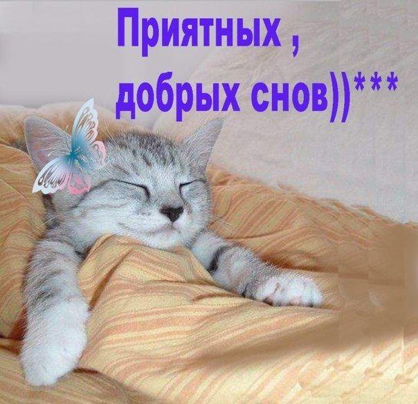 Прикольные картинки спокойной ночи приятных сновидений