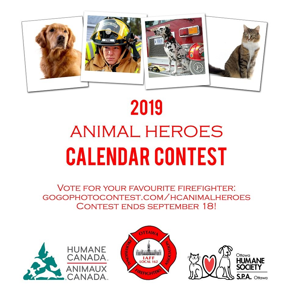 Vote Now To Help Your Favourite Entry Take The Lead And Make Sure They Are Featured In AnimalHeroes2019 Calendar Ottawahumane