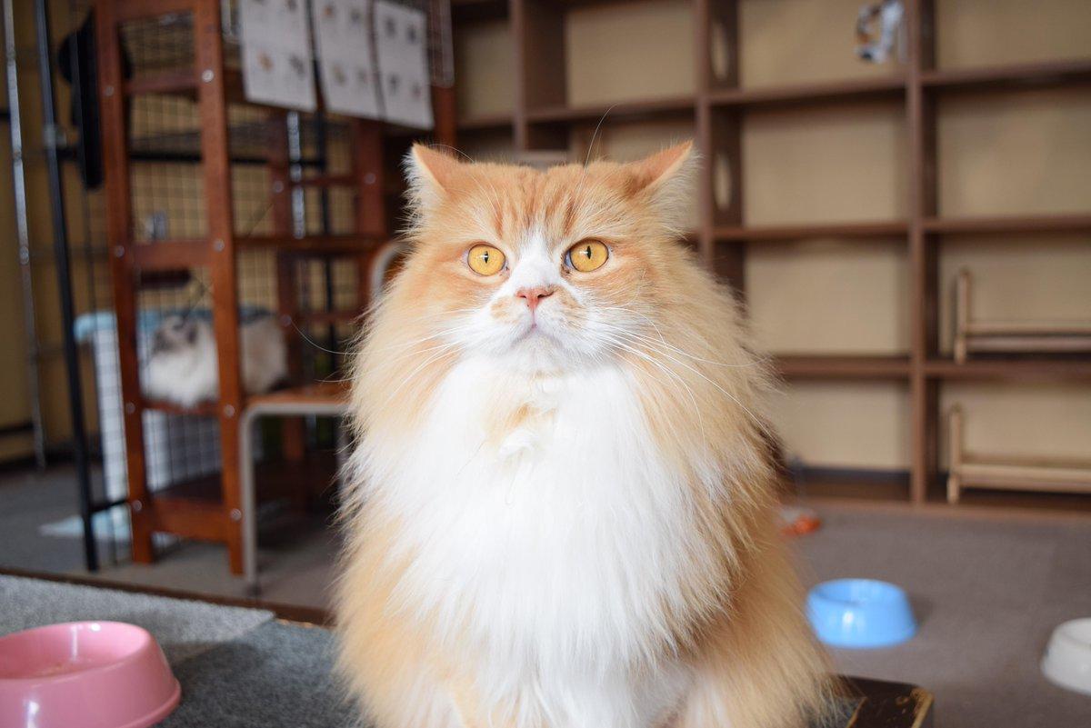 猫カフェ キャッチー (猫cafe CAT-chy) - 東松江/その他 [食べログ]