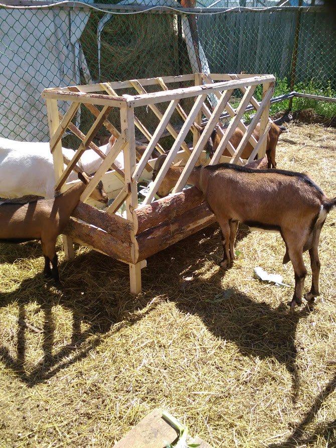 фото изготовление кормушек для сена баранам фрегат