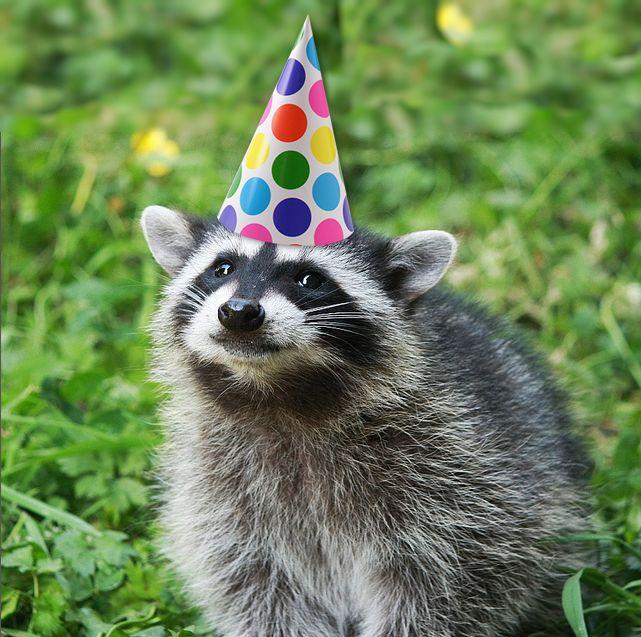 Картинки с днем рождения с енотом, посылаем открытки самое