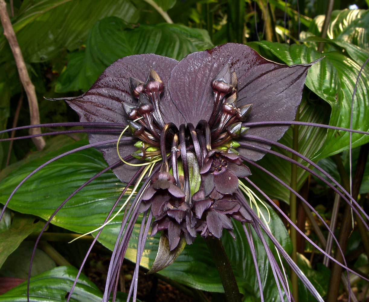 тёлка картинки про редкие цветы угол