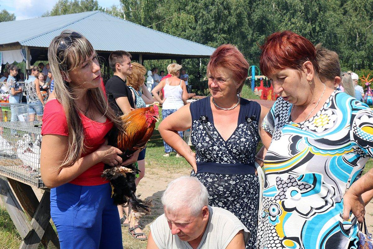 картинки птичий базар в деревне что сегодня газеты