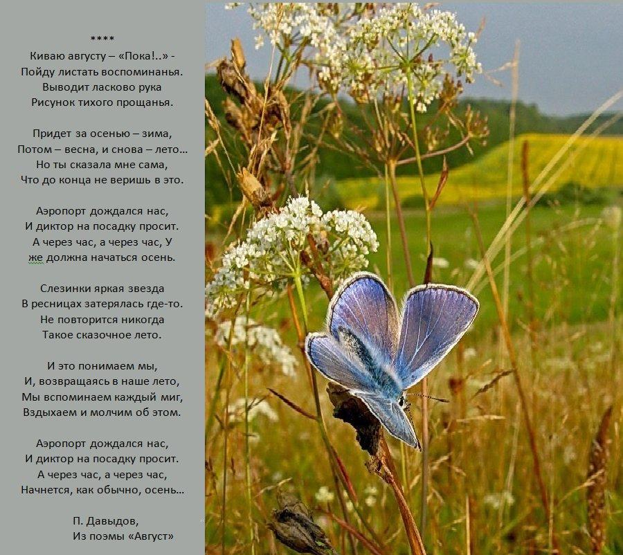 Август стихи картинки, открытки рисунки