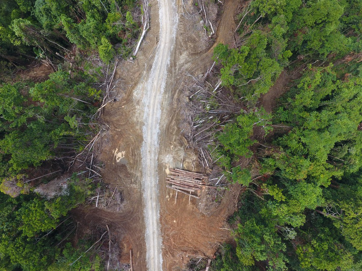 test Twitter Media - A new @Global_Witness reports reveals that many logging operations in #PapuaNewGuinea appear to be breaking the law – but continue to sell off timber from these climate-critical #rainforests overseas.   For the full report: https://t.co/nlK4Znbemb https://t.co/Lt0U7LiwQw