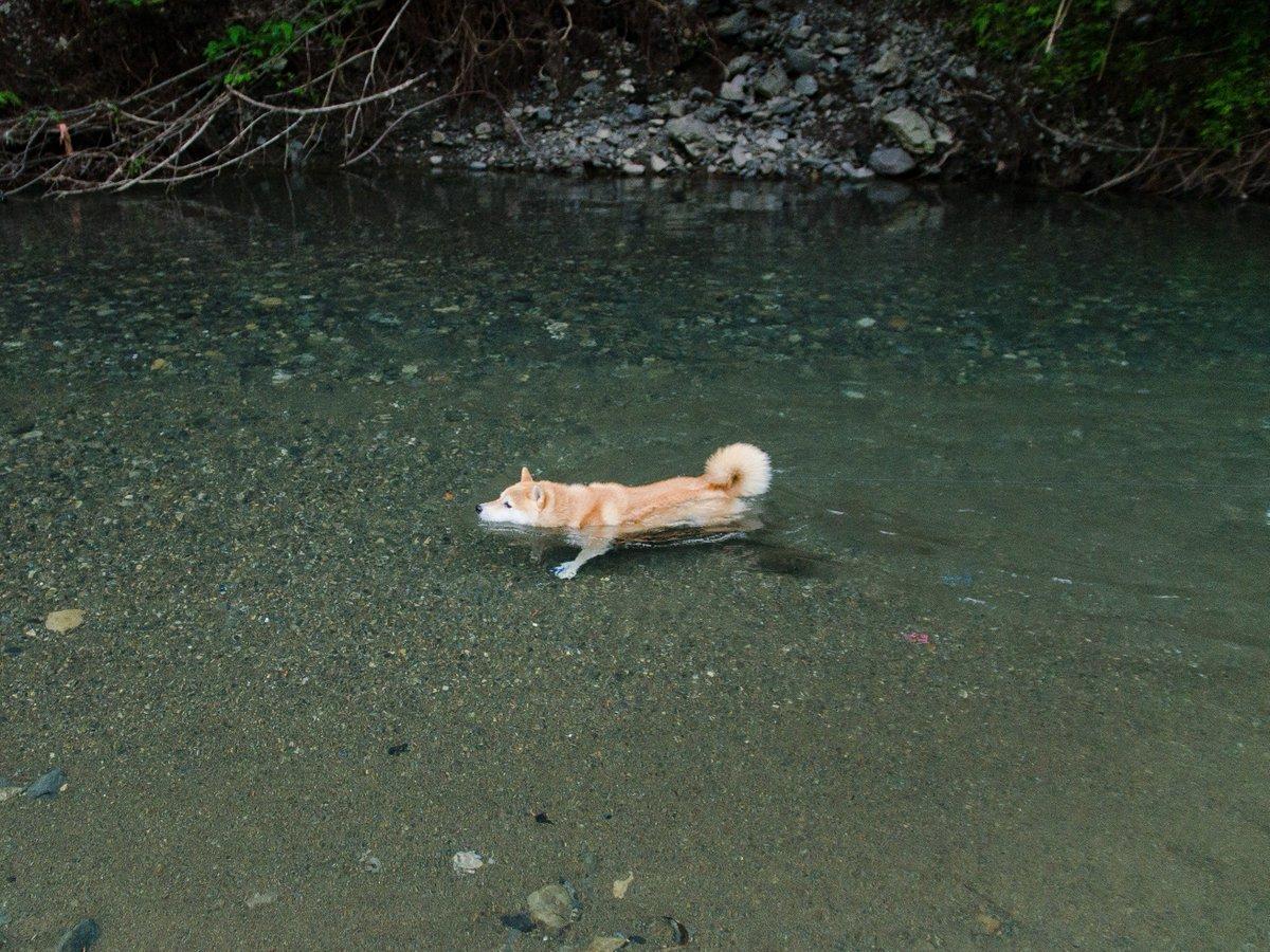 Котёнки, коты, кошечки и кошководы и... псы :-) - Страница 45 Dj6uOFqUcAAefcW