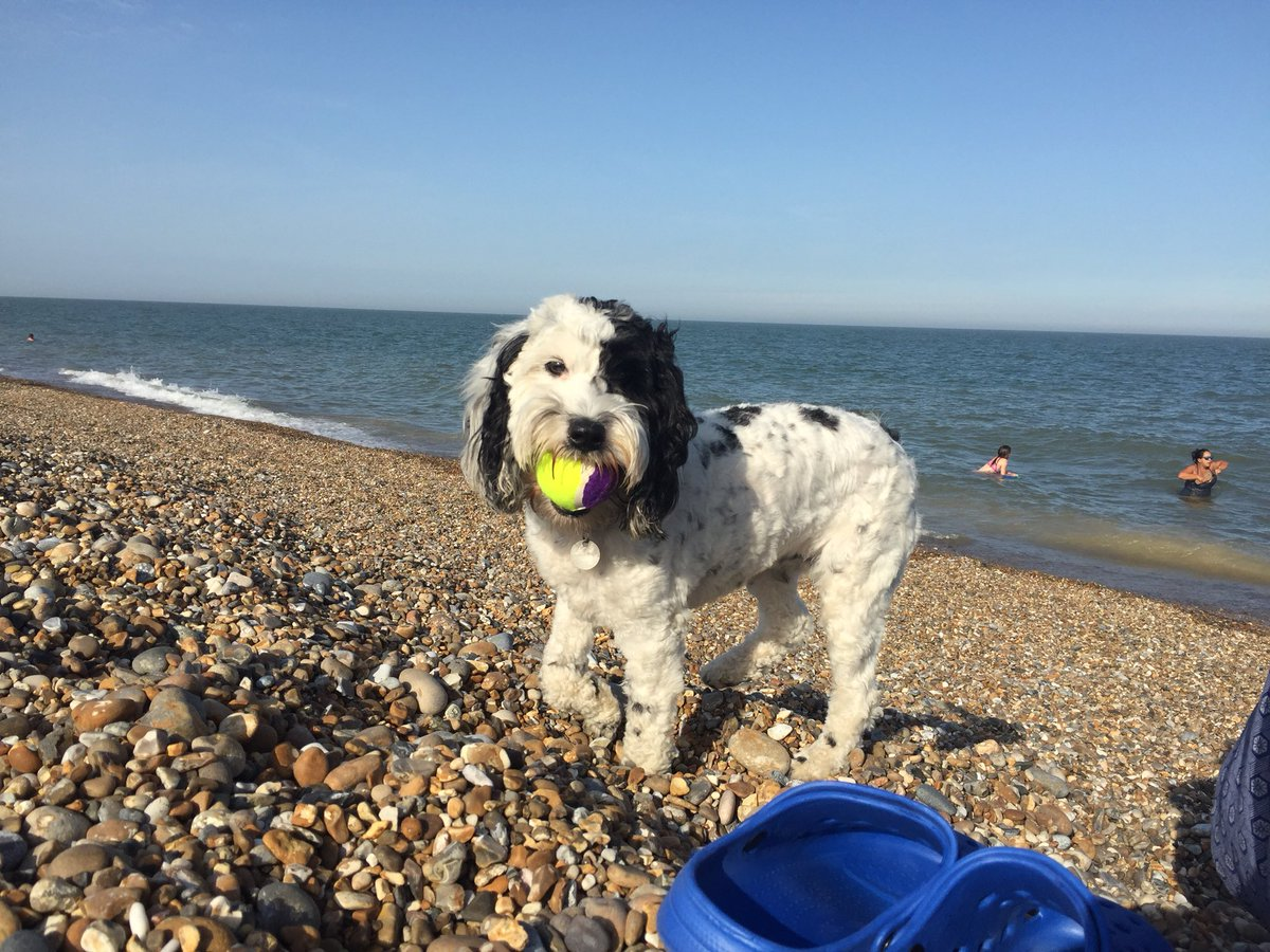 Beach Hound (.....with obligatory ball)