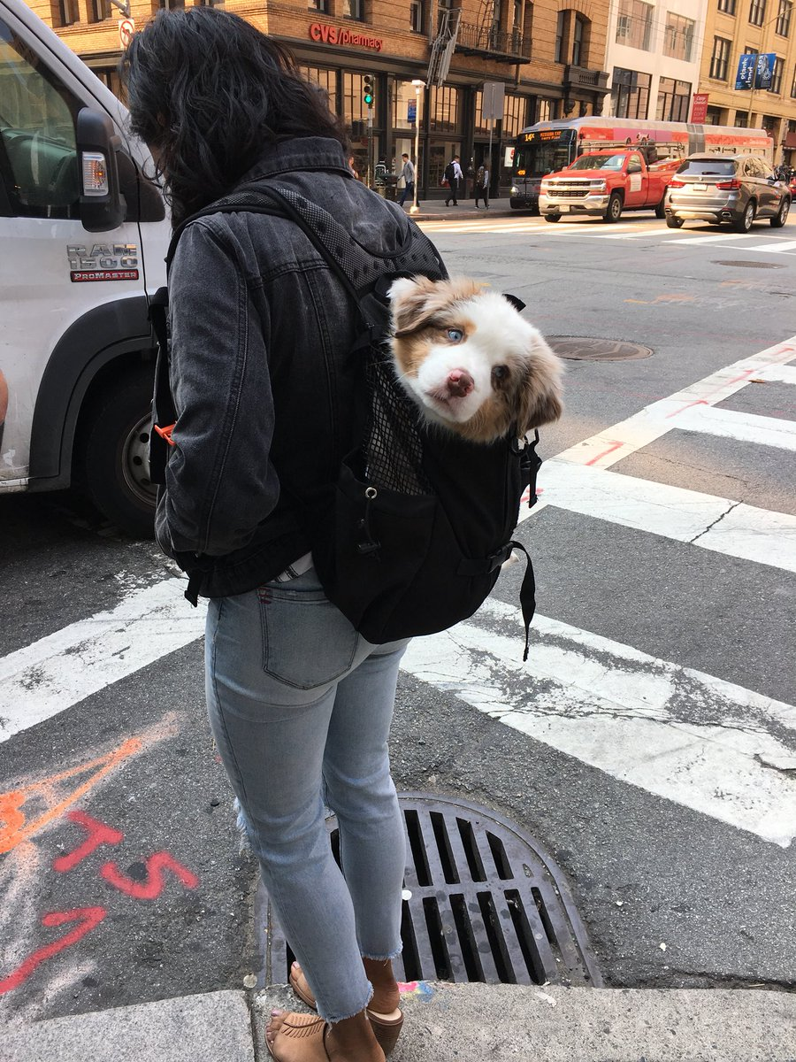 RT to #bless your timeline with backpack puppy