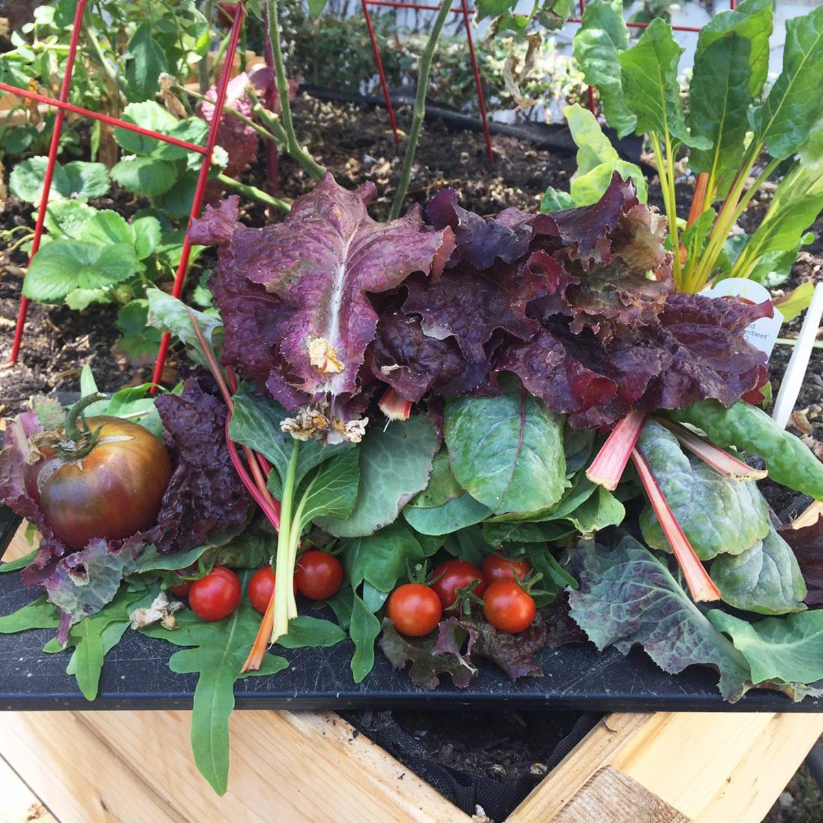 Garden Update! You may recall the edible garden we built for #EarthWeek back in April. We're stoked to share our recent first harvest and show you how much it's grown. Gardening tips, always welcome  <br>http://pic.twitter.com/D0EH003TRf