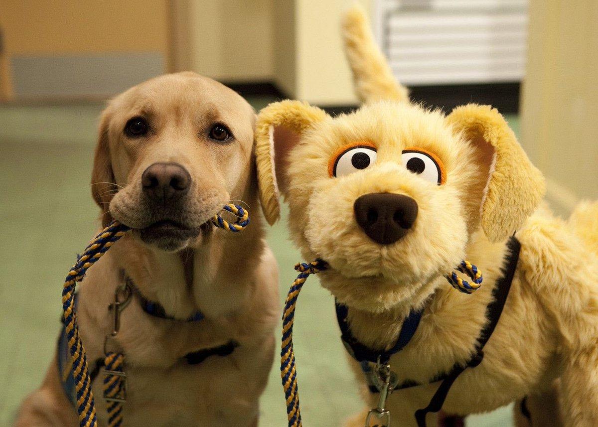 Картинки про приколы собак