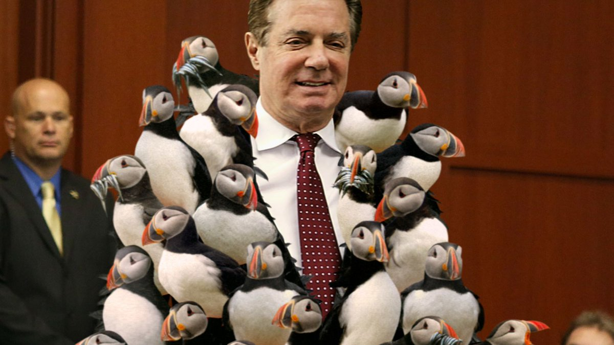 Defiant Manafort Enters Trial Wearing Coat Made Of Live Puffins trib.al/tHoQkn6