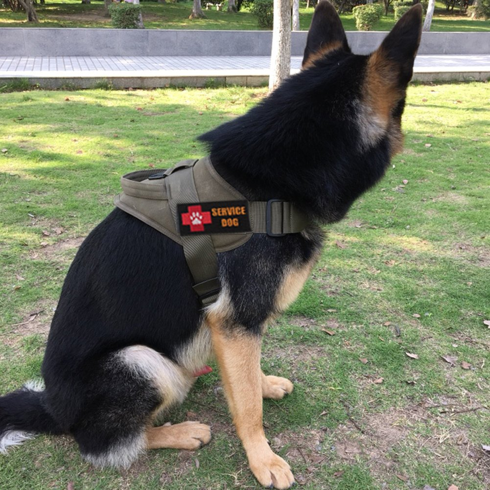 Dog Harness Husky Hashtag On Twitter