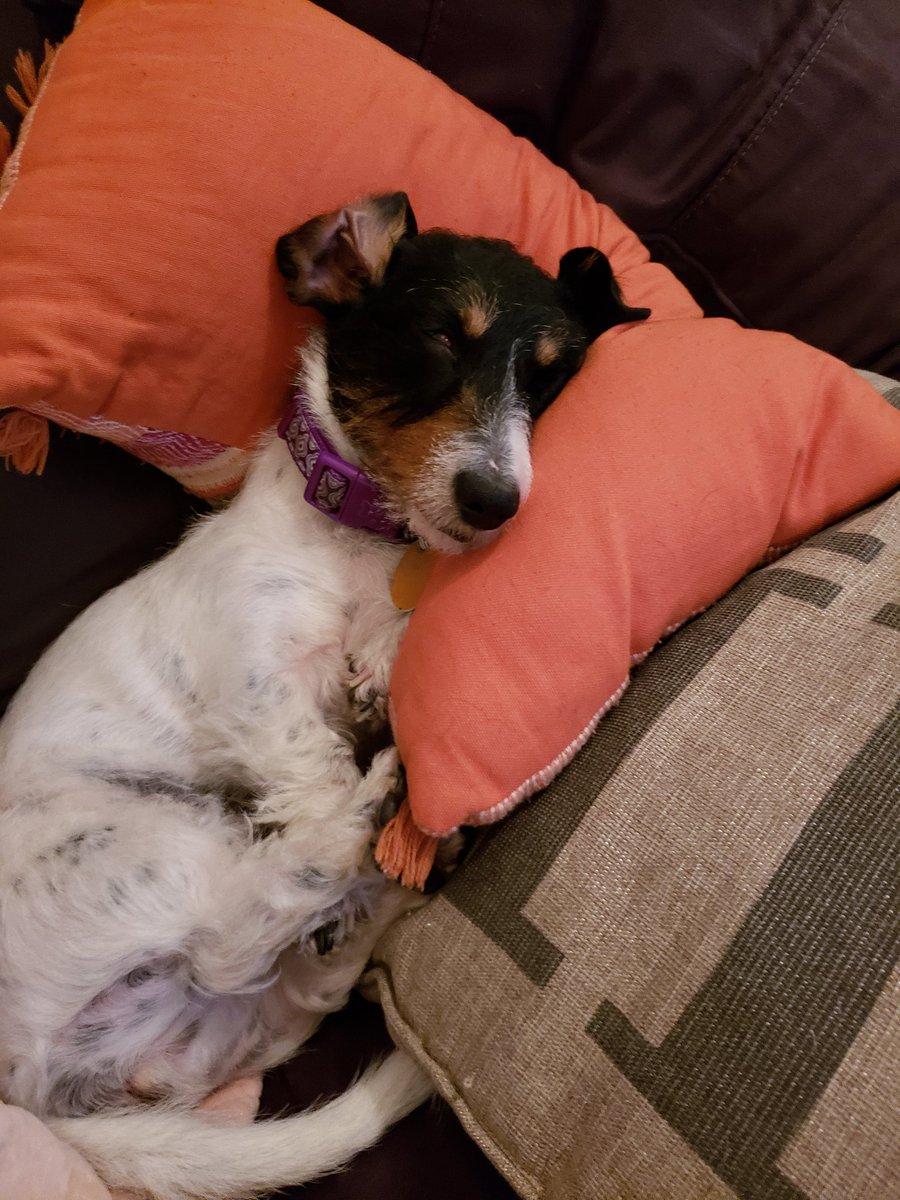 Duskull Matthboos On Twitter Heres Mabel Sleeping On A Pillow