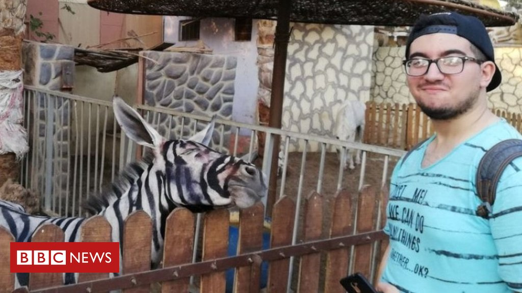 Egypt zoo accused of painting donkey to look like a zebra https://t.co/QpPzErSLSI