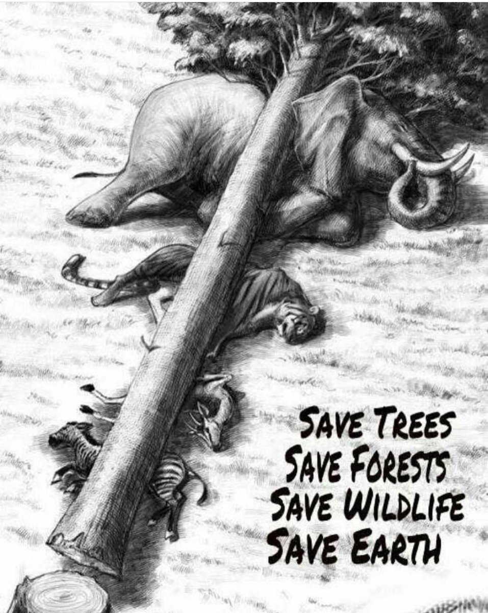 save forest and wildlife