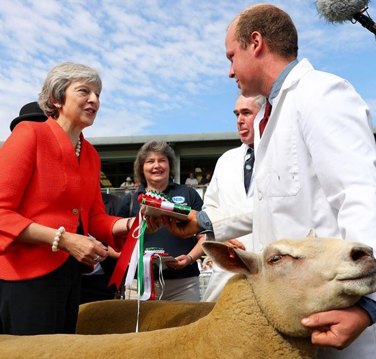 How much for the sheep? Does it have any government experience?