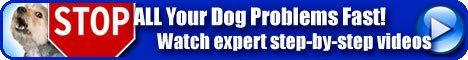 Online Videos - You get an expert #DogTrainer at your service, in your home or on the walk, at anytime 24/7. #DogTraining #DogBehavior  http:// tinyurl.com/DogTraining01  &nbsp;    <br>http://pic.twitter.com/PA5asvGej7