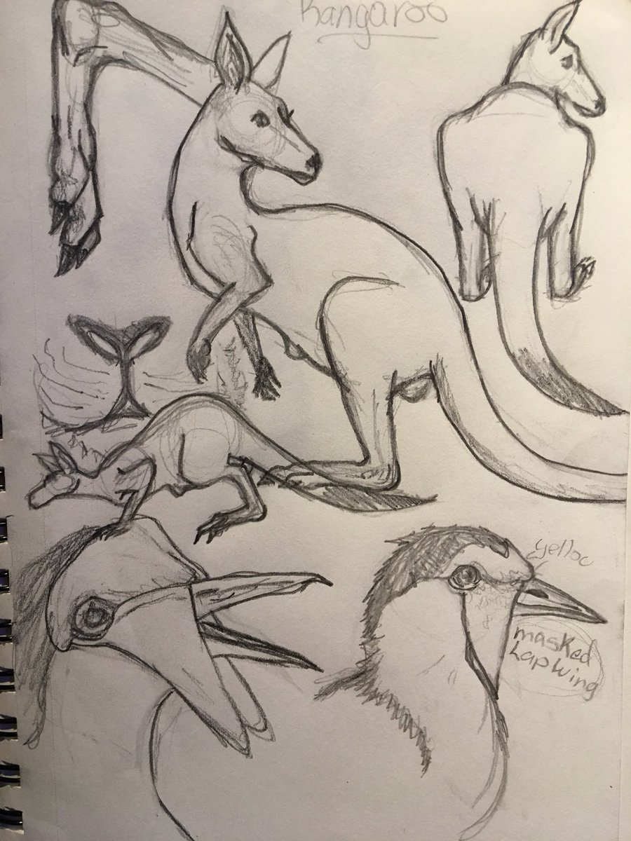 Zoo zoosketch pencil study ruff sketchpic twitter com qtudft7h0i