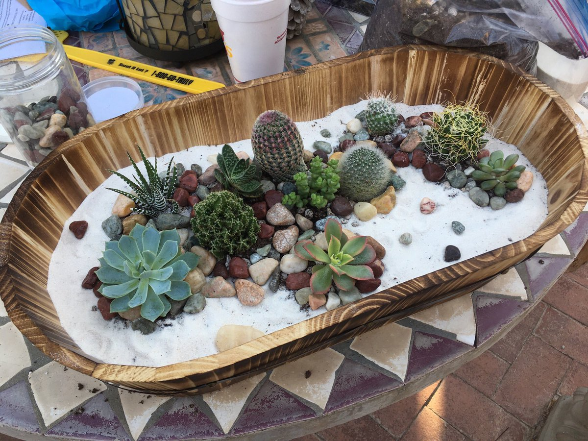 Making succulent gardens with your boo low key a whole mood