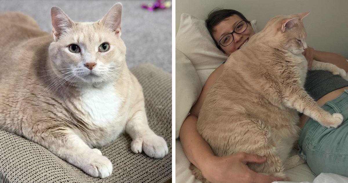 Как Похудеть Британскому Коту. Основные способы — как помочь похудеть кошке