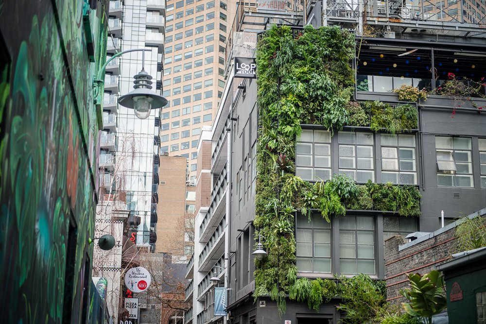 """Loop Roof On Twitter: """"The Loop Inspired Vertical Garden Installation Was Completed Last Week, A Project Over 18 Months In The Making! We Are Absolutely Thrilled With The Result- The Coverage Is"""