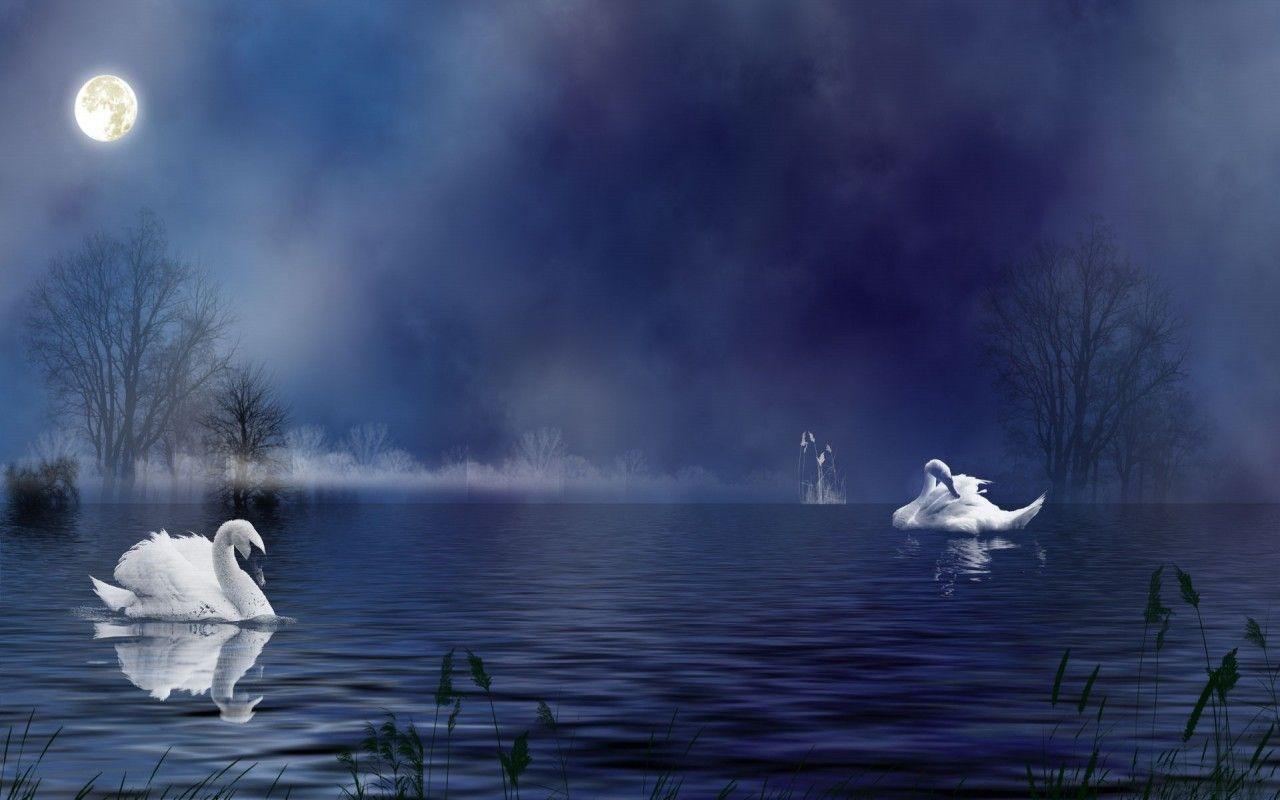 Картинки на рабочий стол одинокий лебедь