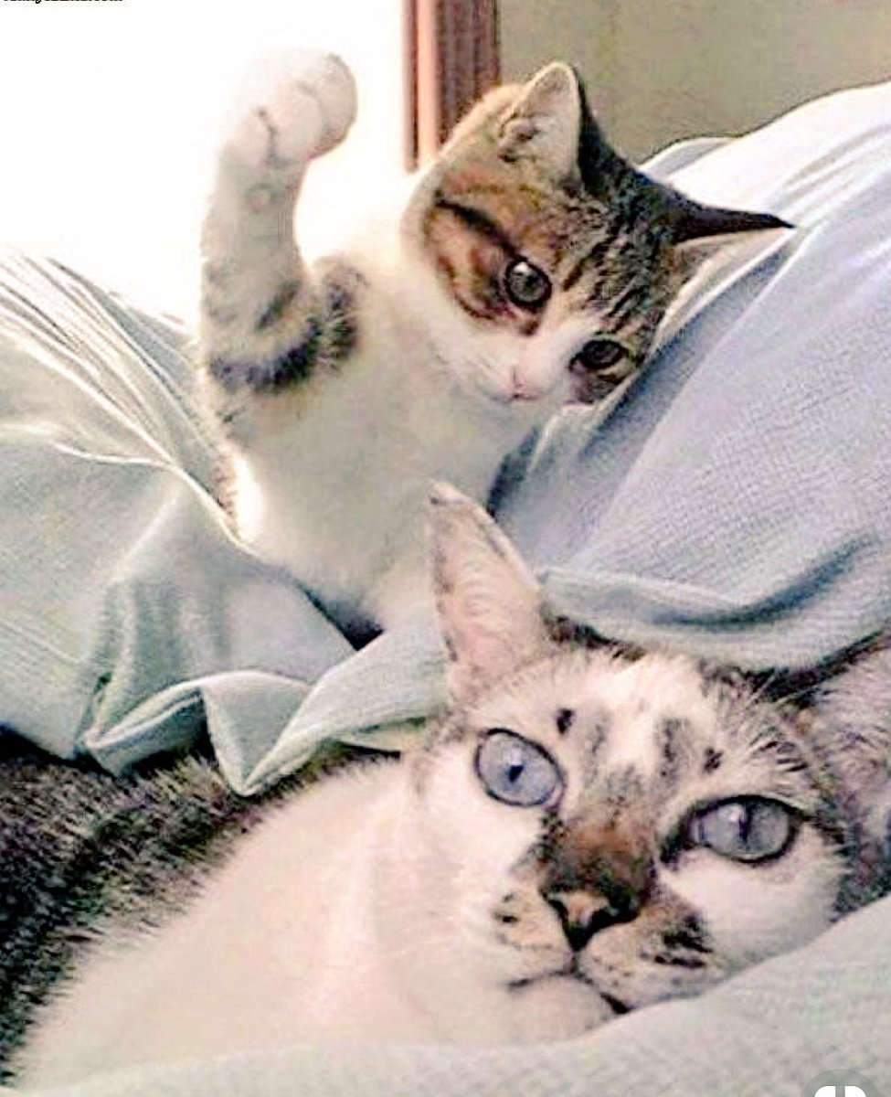"""Russell Scott⭐ on Twitter: """"that split second before disaster💥 #pets  #pranks #funny #cat #F4… """""""