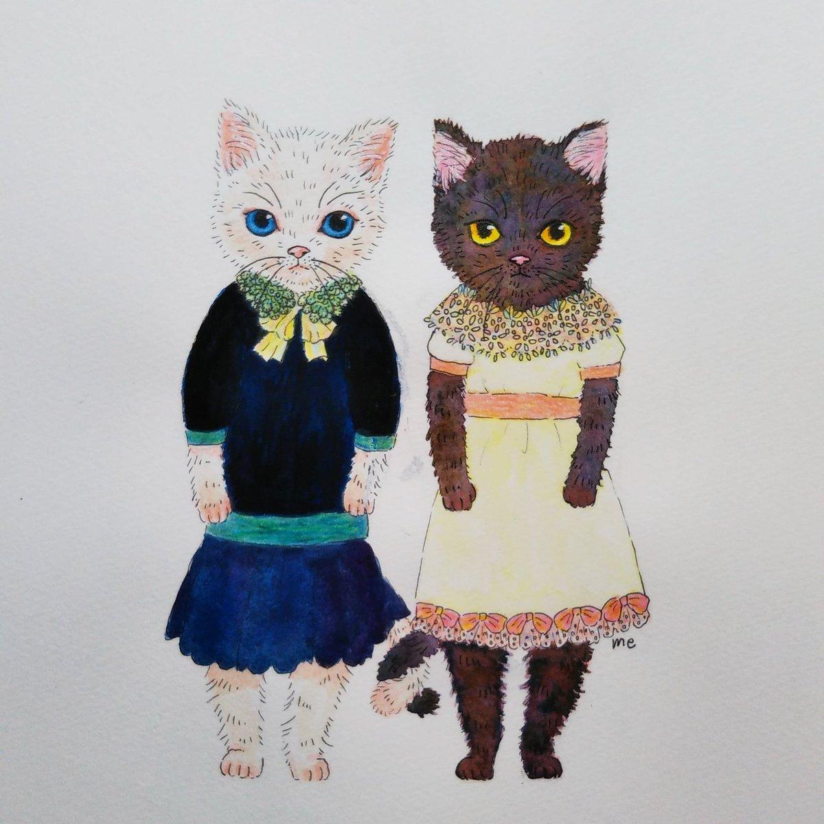 """ねこのひげ on twitter: """"白猫と黒猫。動物に服を着せるとき、リアル"""