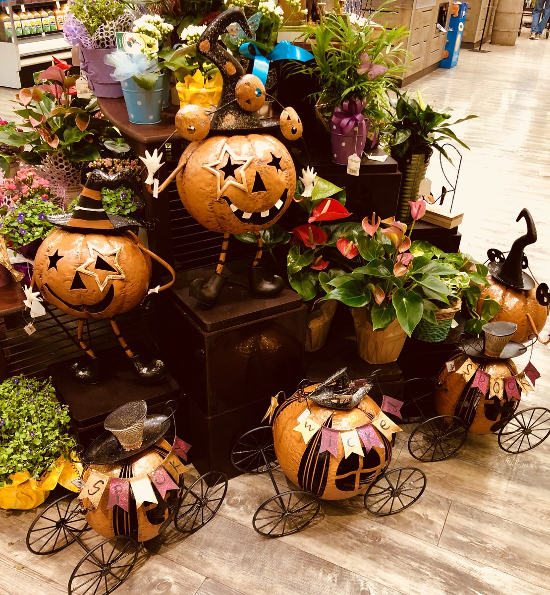 Safeway Halloween Decorations.Mi Ai Parrish On Twitter Living In The Desert I M Often Confused About The Seasons But I M Positive It S Too Damn Early For Safeway To Have Halloween Displays Stop Messing With My Mind