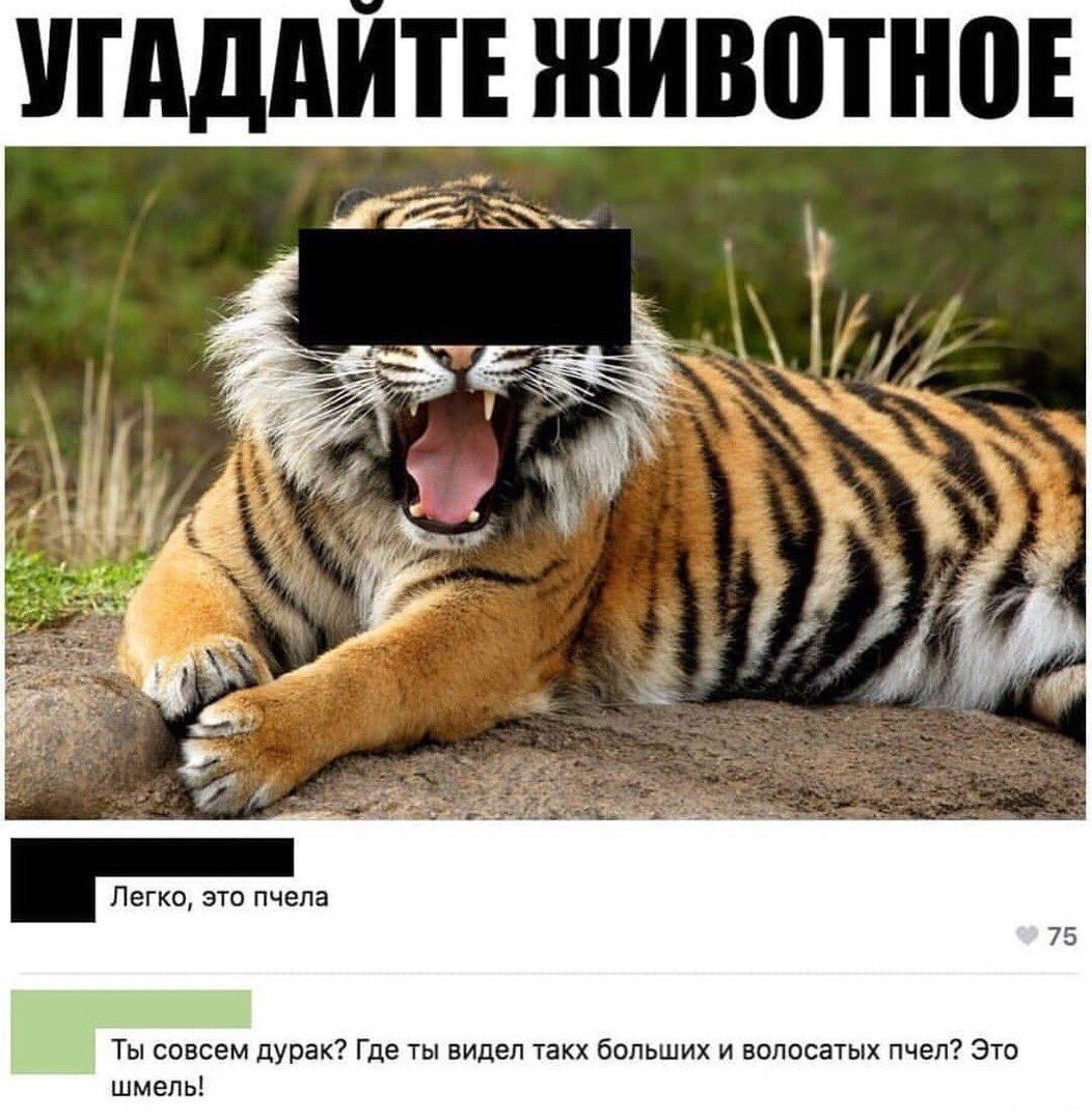 угадай животное по картинке мем