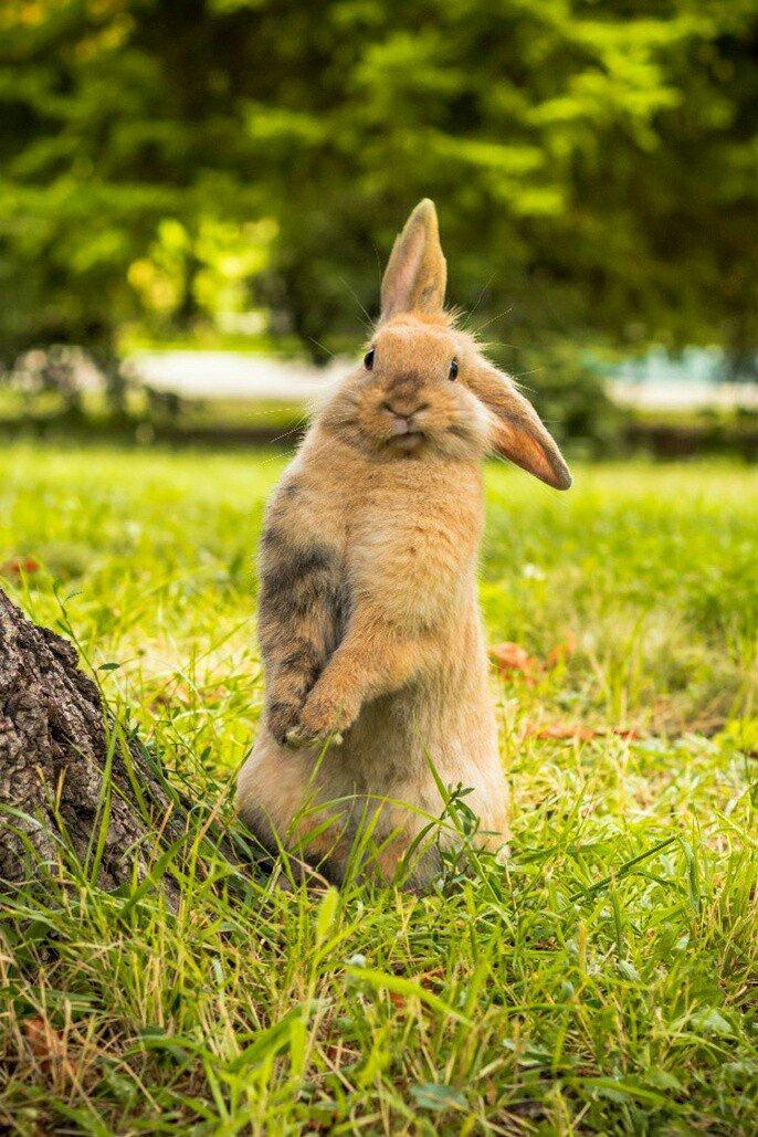 склеп находится прикольные фото с кроликами марионетки