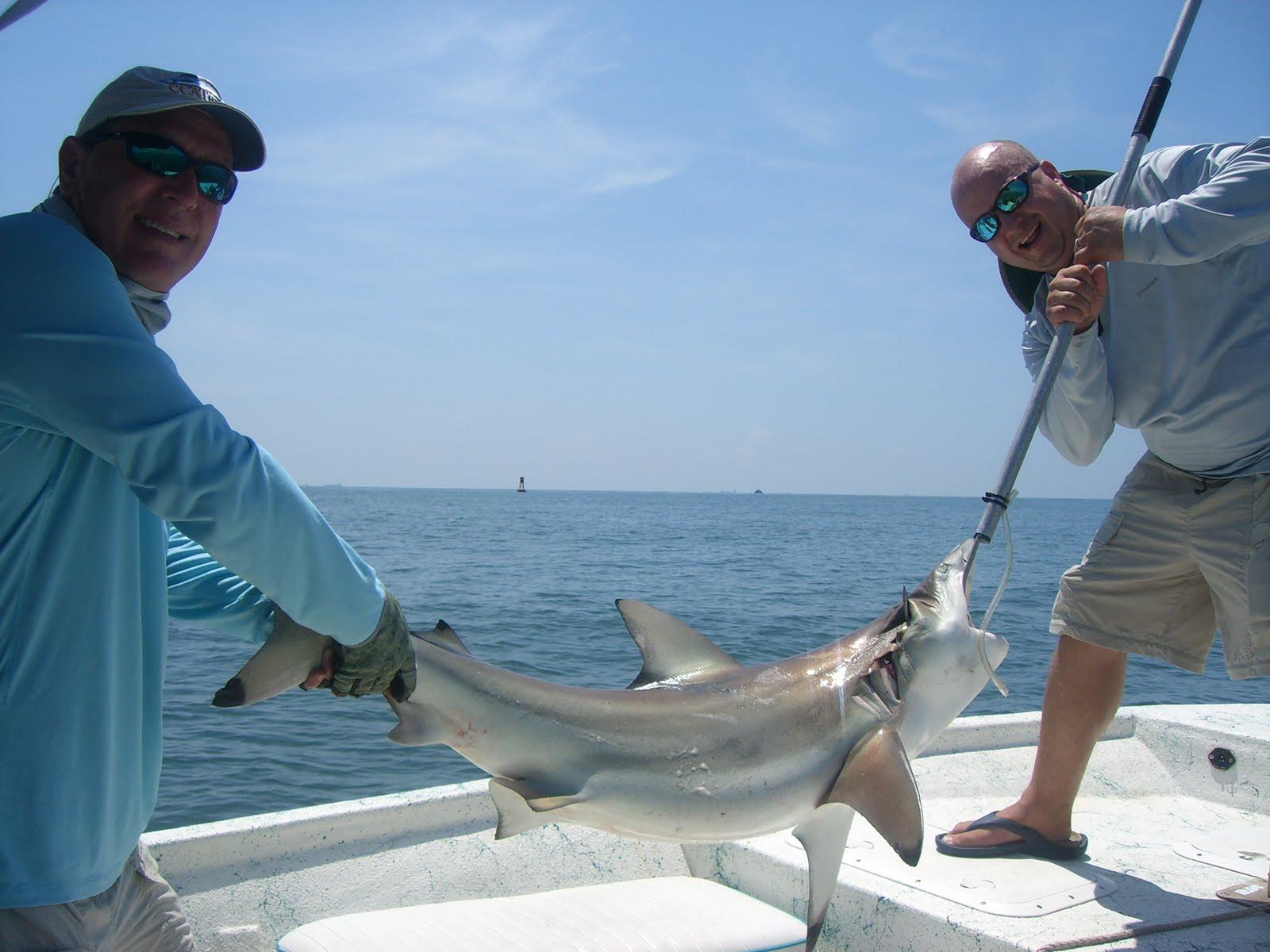 выполнить ловля акулы картинки превращении фотографии искусство